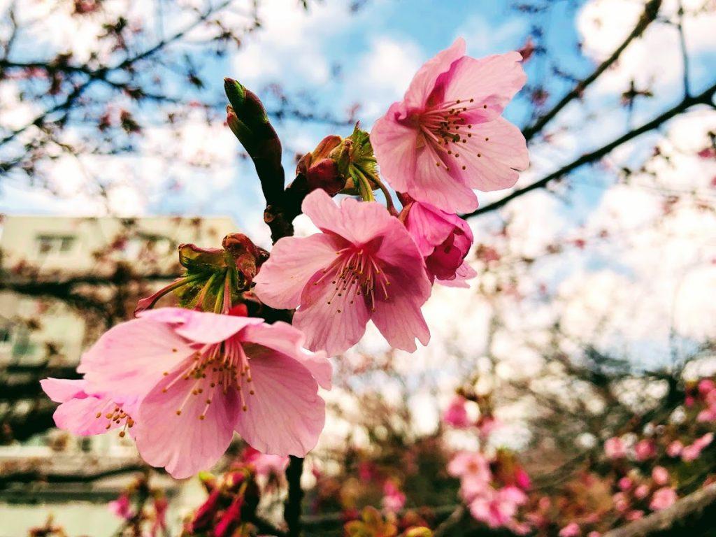 千鳥ヶ淵の桜が少しだけ開いていました。