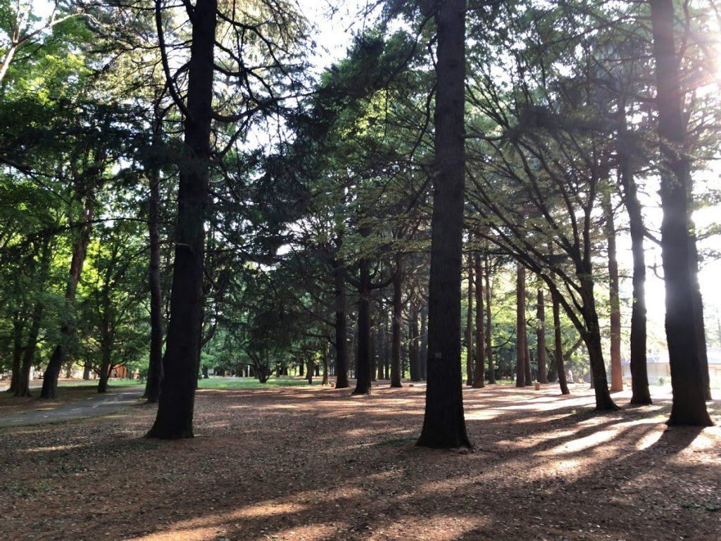 代々木公園クロカンコース